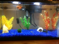 People who have just started their aquarium adventures   Help on what to do