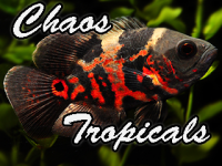 Tropical Fish Of Chaos.