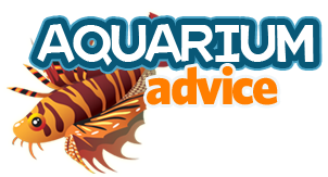 Aquarium Advice - Aquarium Forum Community