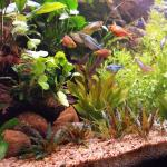 Setting up a Planted Tank using the Walstad Method