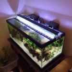 20g long low-tech planted tank