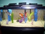 40B Goldfish