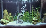 Freshwater - 29 Gallons
