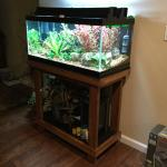 Project Low Buck Planted Tank