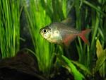 FW Fishies