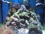 30g Reef at  3-4 months