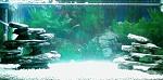 My Tropical Fish Tank