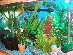 """Front view of 29G aquarium, the """"kids aquarium"""""""
