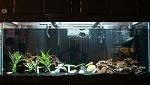 my fresh water tank