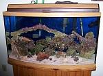 Salt Aquarium