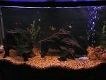 Freshwater 46 gal