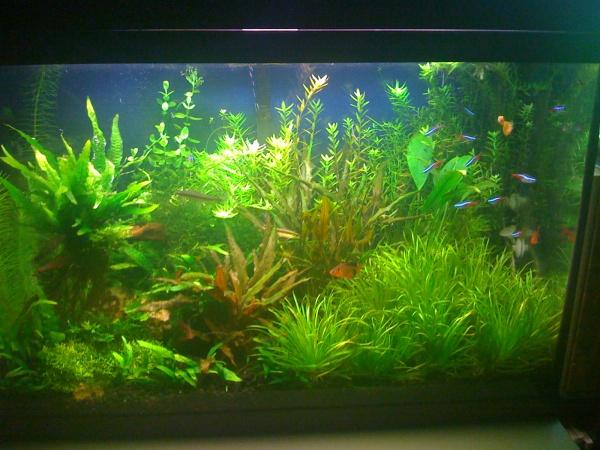 Landscaping - Page 2 - Aquarium Advice - Aquarium Forum Community
