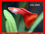 USA Red