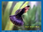 Half Black Blue