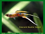 German Emerald Dbl. Sword
