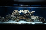 these are my tank pictures