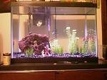 20 Gallon Freshwater