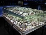 Iowa Pet Foods & Seascapes Cool Setups