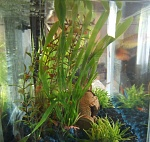 My fresh water aquarium