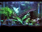 20g Aquascaping Progression