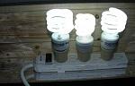 cheap lighting for freshwater