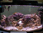 on going reef tank