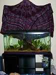 55 gal random-fish-I want tank