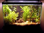 My 20Gal Planted