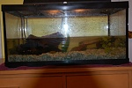 Fishboy444- Crab pics