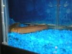 Natalie's fish 4