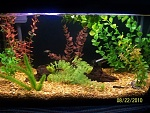 other 10 gal