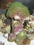 Some star polyps, ricordia, and mushrooms