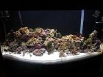 100 gal reef