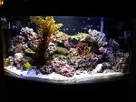 100 gal. BF Reef