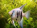 My tank and fish