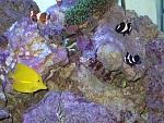 120g reef