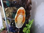 red eyed tree frog on glass