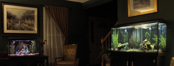 Man Cave Show Tank : My tank room aka watery man cave aquarium advice
