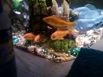 My goldfish <3