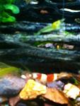 Shrimpies :)