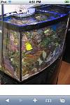 72 gallon reef tank