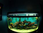 new 72 gallon reef