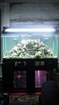 100g Reef Tank