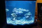 My fish and tanks :)