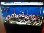 38 gallon saltwater