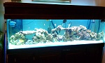 my 125 gallon aquarium