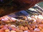 My fishies :>