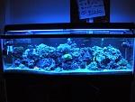 125g Reef Tank