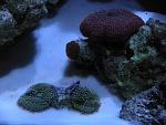 Mushrooms and ricordeas