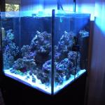 60g Rimless LED Coral Tank